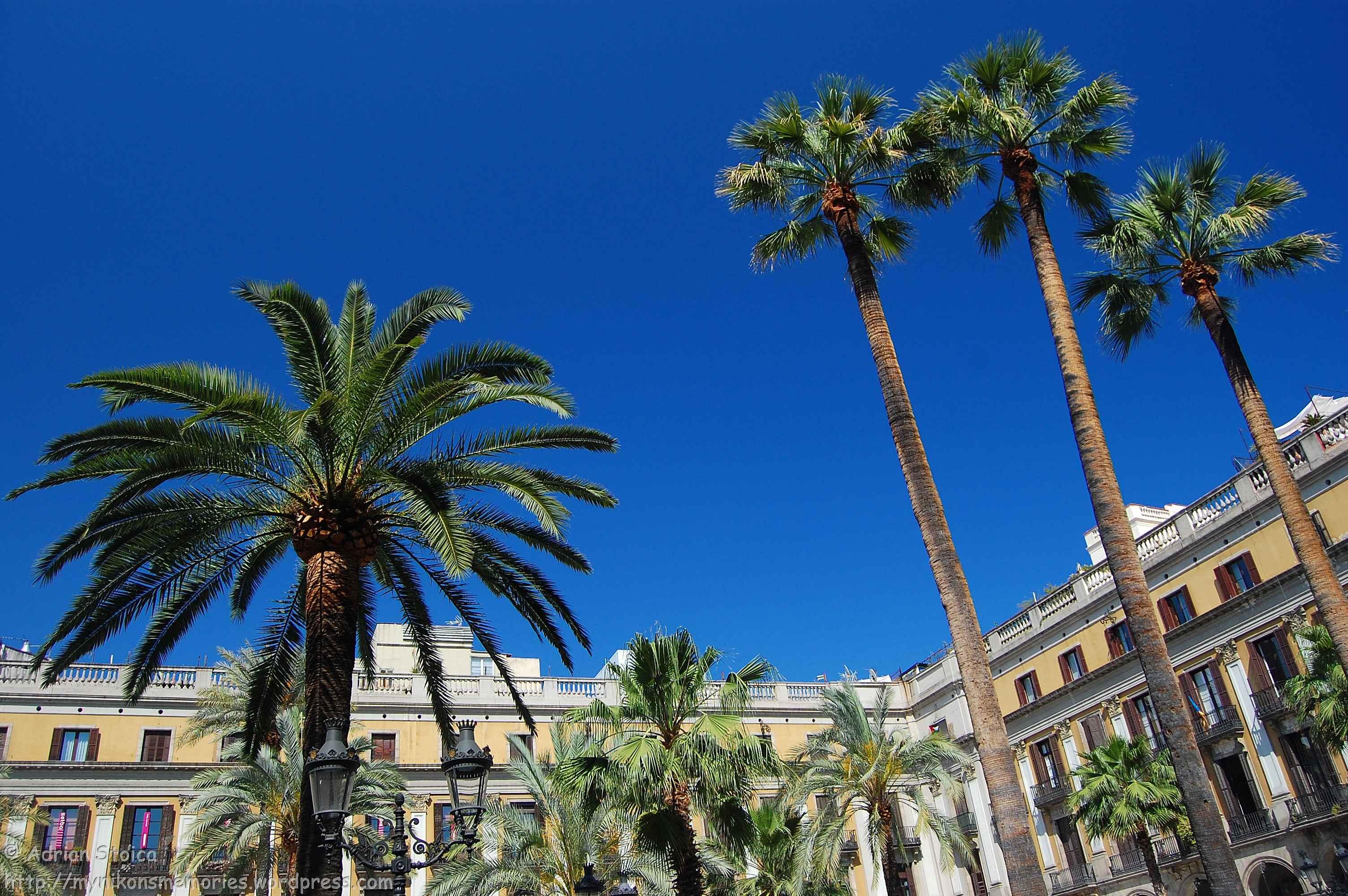Plaça Reial Barcelona_3