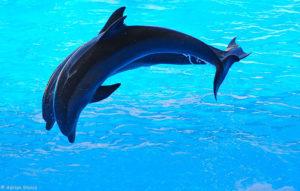 Delfini la Loro Park, Tenerife