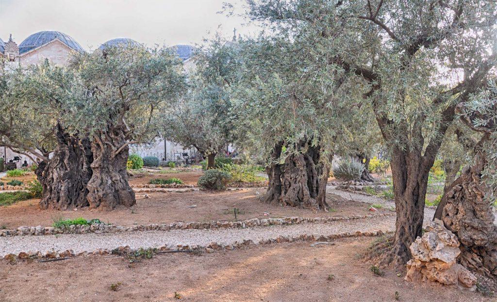 Gradina Getsimani